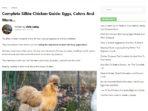Ayam-Silkie-004